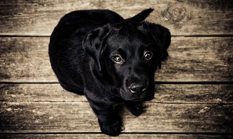 best hardwood flooring for pets